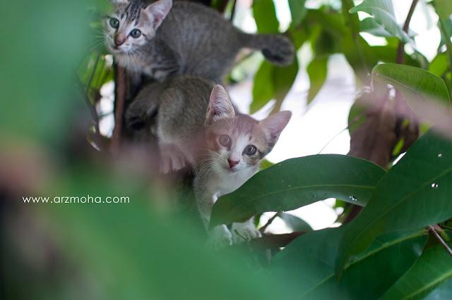 gambar anak kucing comel, anak kucing hilang, seronok bela kucing, seronok beri makan kucing, gambar anak kucing comel dan manja,