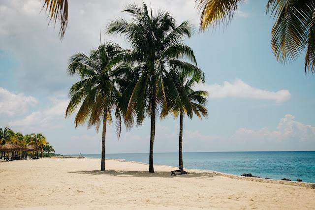 Coconut Tree on the Beach HD Wallpaper