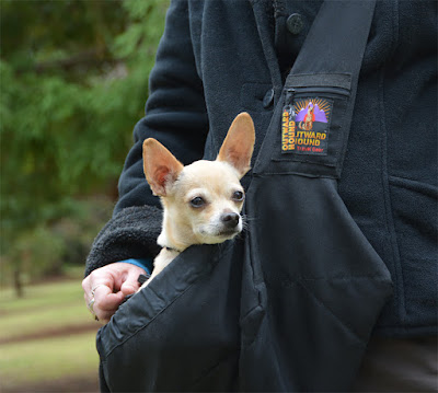 Outward Hound PoochPouch Sling in action