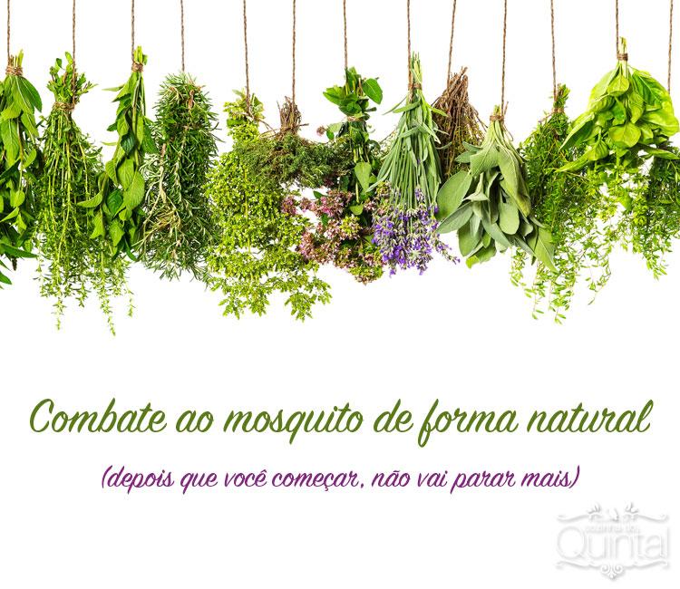 Combate ao mosquito de forma natural. Imagem original Shutterstock, todos os direitos reservados.