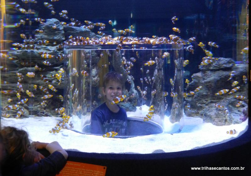 2 Oceans Aquarium Waterfront Cape Town