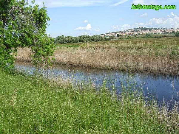 Riu Gaià, amb el poble d'Altafulla de fons