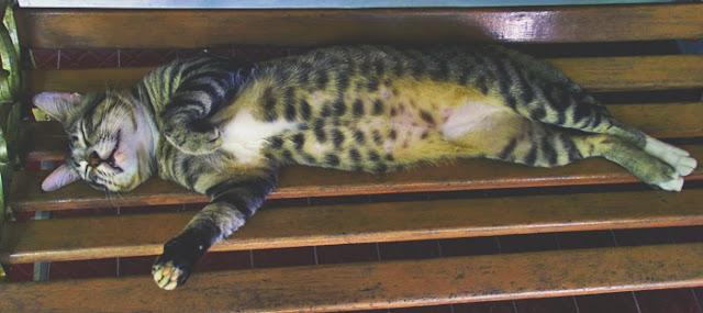 Kucing tidur paling lucu di dunia