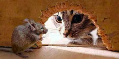 Cara Membasmi Tikus Secara Tradisional Dan Modern Tutorial: Cara Membasmi Tikus Secara Tradisional Dan Modern