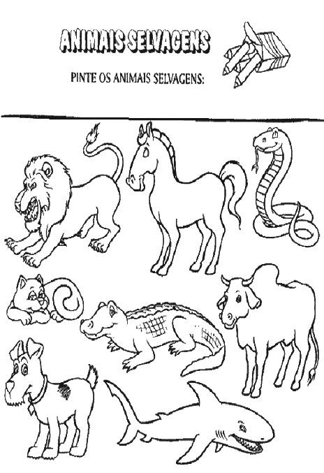 Animais Selvagens E Domesticos Atividades Para Imprimir E Colorir