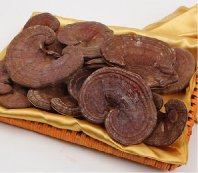 Triterpenoids tồn tại trong nấm linh chi có tác dụng tốt với sức khỏe