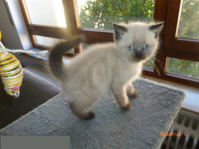 Sanabelle Trockenfutter Kitten