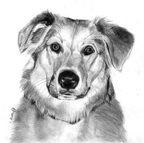 How to Draw Black and White Dog | Beautiful Drawing