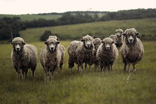 Compter les moutons est-il efficace pour s'endormir ?