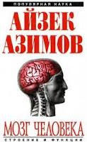 Мозг человека: строение и функции