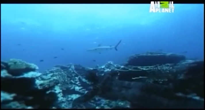 documentario sobre sereias animal planet