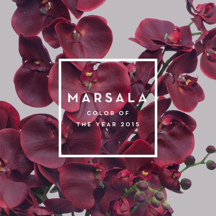 Marsala, color del año 2015