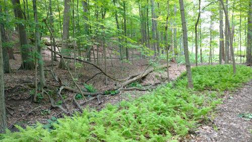 Buckeye Trail Tinker's Creek