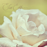 Vintage Soft White Rose Petals Close Up Photography Green Background. Beautiful. Gorgeous.