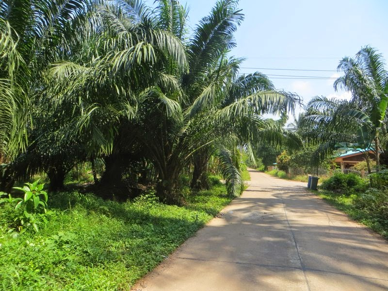 Зелень и дорога Таиланд