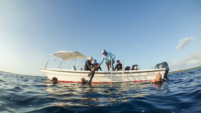 Thats how diving on the Tortuga works. With the small boat to the mainboat.