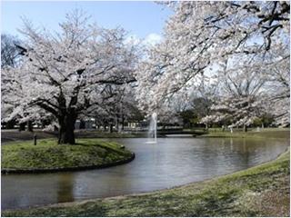 สวนสาธารณะอุเอโนะ (Ueno Park)