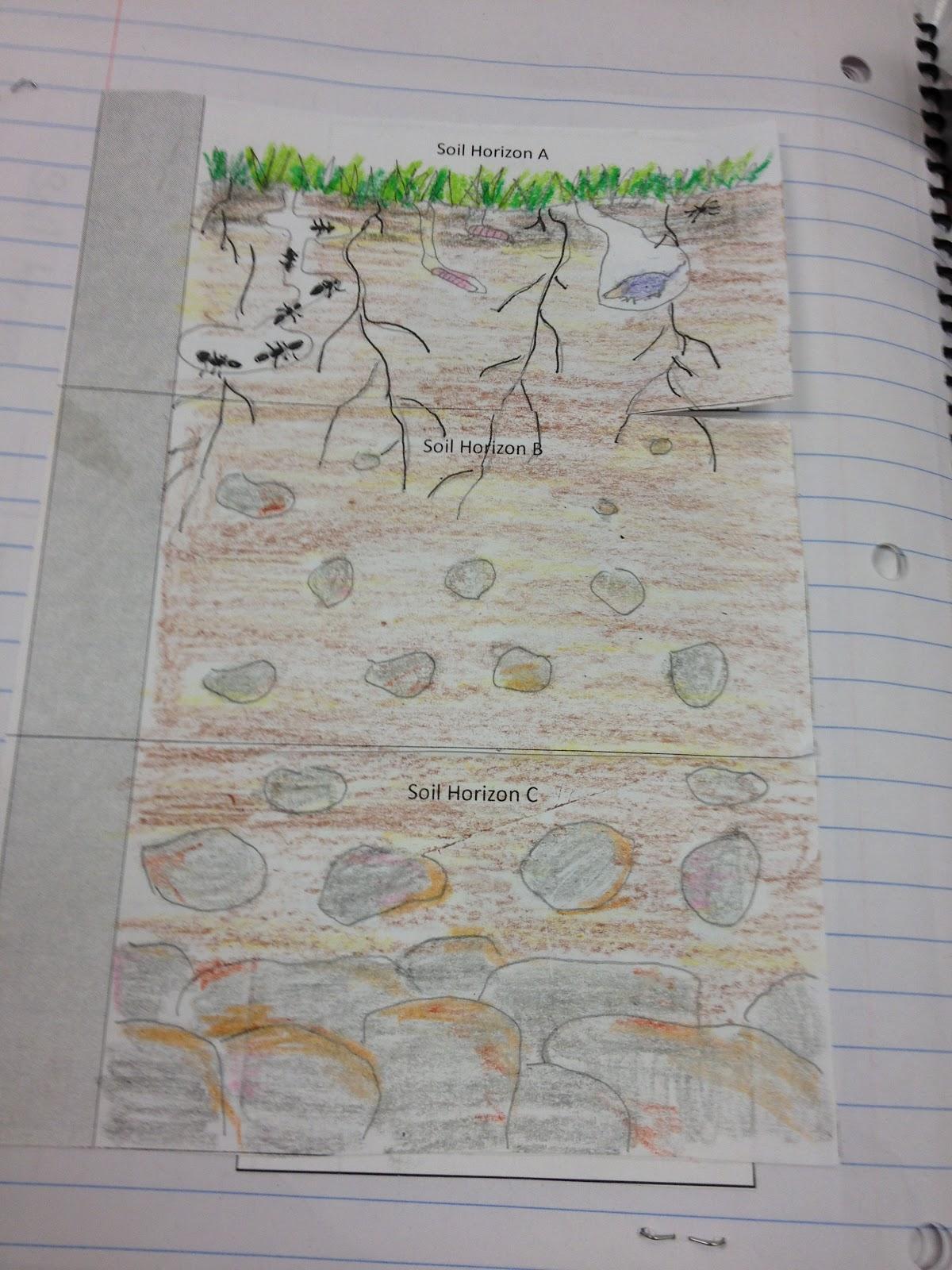 Ist Year Teacher Soil Investigation