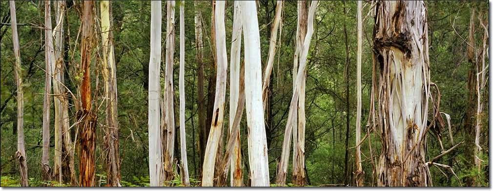 Jeremy Turner - Photography - Trees