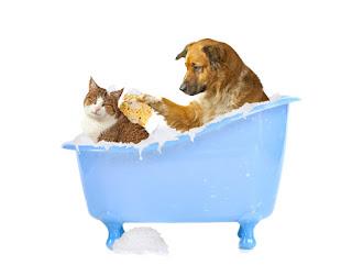 La shampoo terapia negli animali