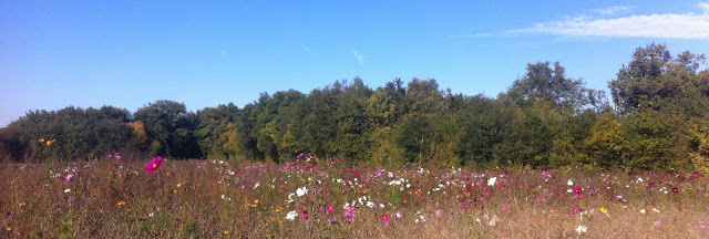 Wild flowers under a blue sky in the Loire Valley