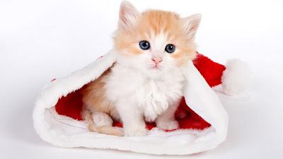tier Katze Weihachten