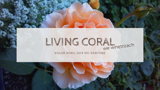 living coral we wnetrzach