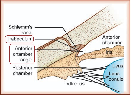anterior chamber angles
