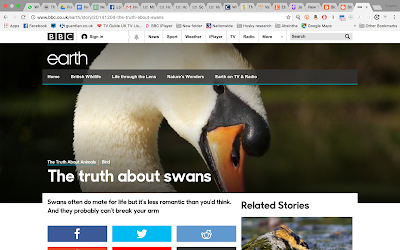 The Truth About Swans, BBC Earth December 2014