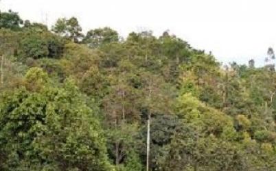 hutan kuansing 2017