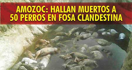 Más de medio centenar de perros asesinados en fosa clandestina