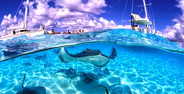 Berenang Sambil Memberi Makan Ikan Pari