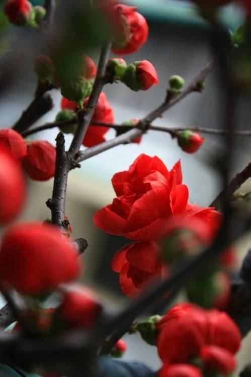 Flori de primavara copac inflorit