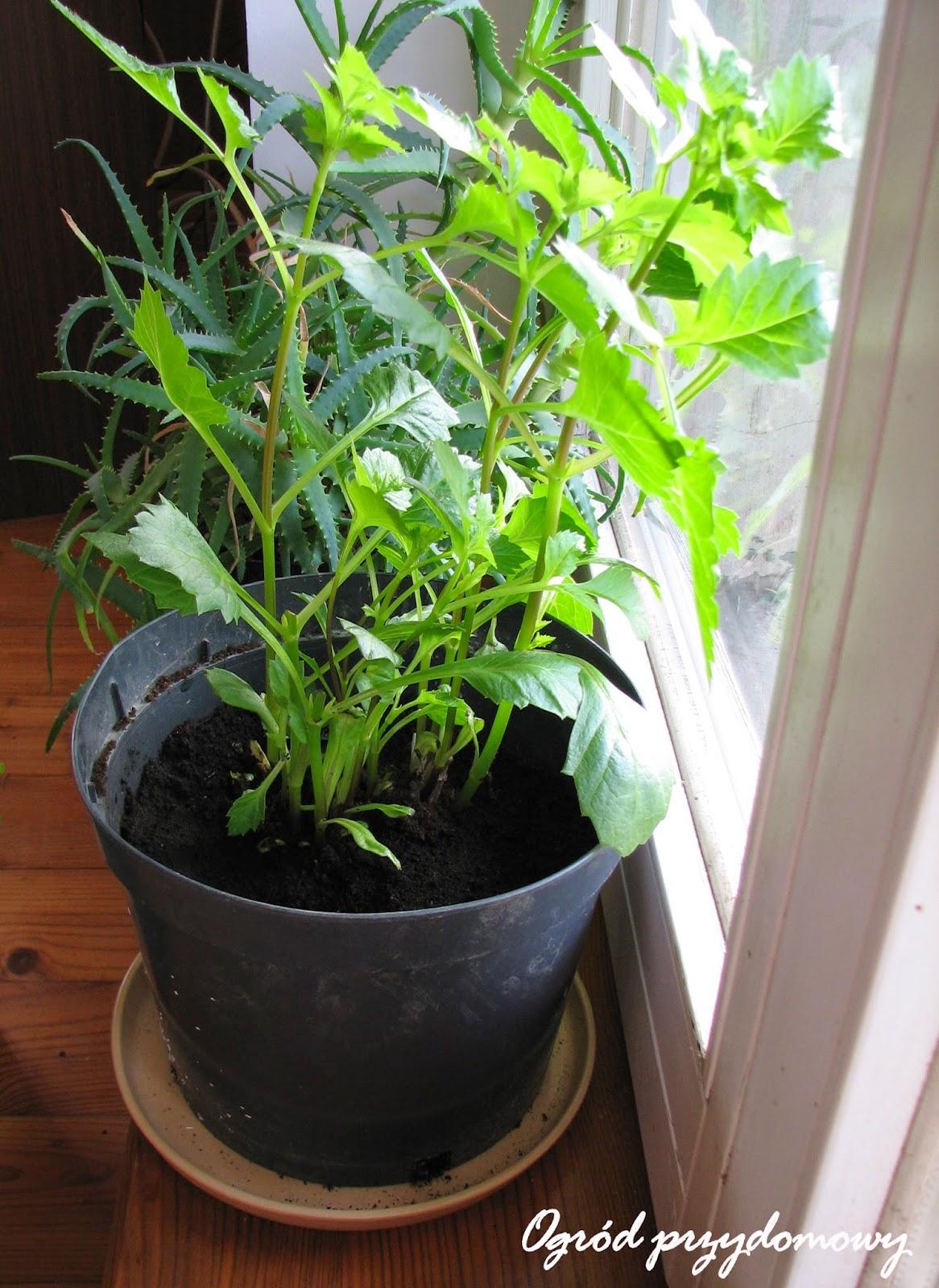 wpadki ogrodnicze, wpadka ogrodnicza, ogród przydomowy