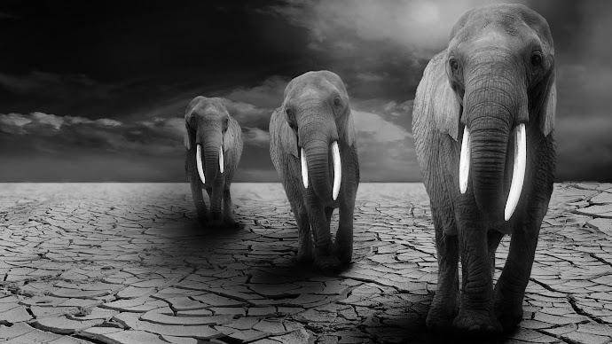 Wallpaper: Elephants on Africa's Arid Lands