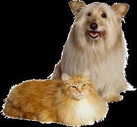 Cachorro amigo do gato png