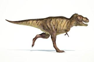 Tyrannosaurus Rex Özellikleri