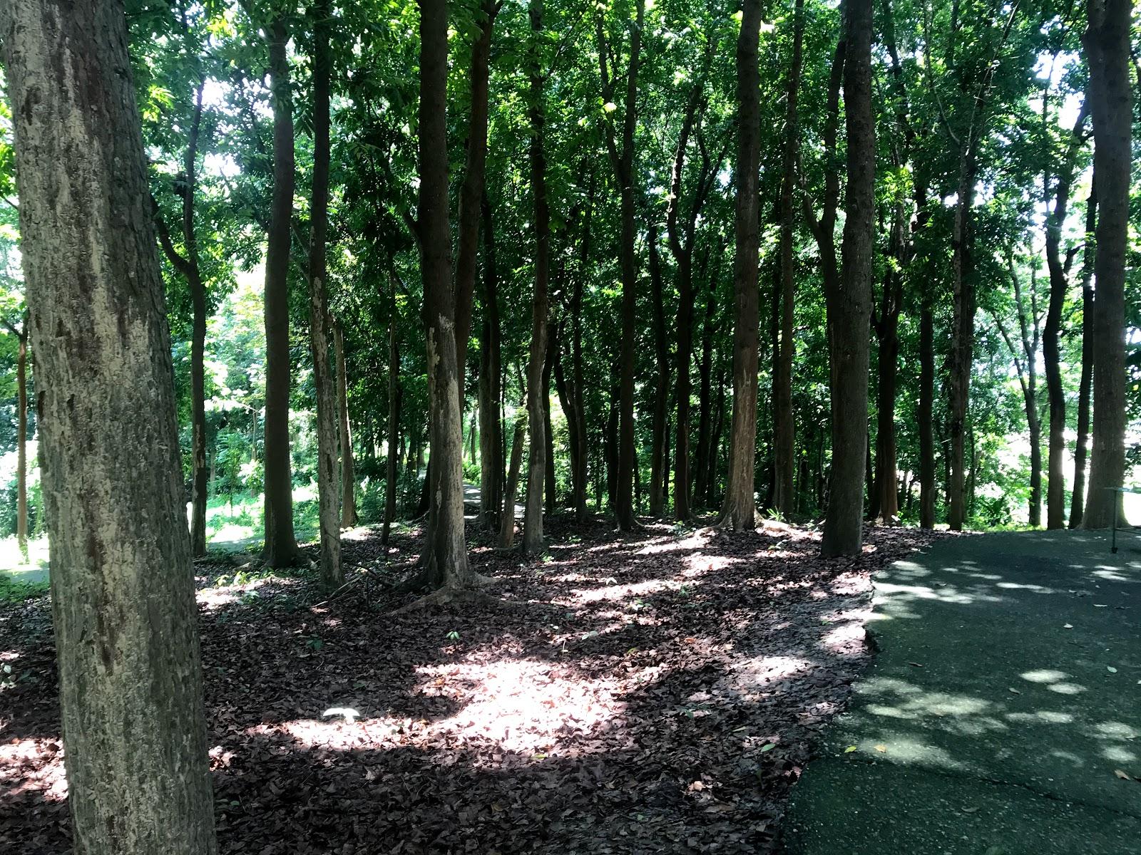 【台南|官田】川文山森林生態保育農場|壯闊的百年榕樹|免費入場|台南川文山半日遊(二)