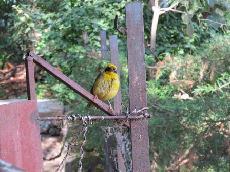 kath and alan in ethiopia birds in bahir dar