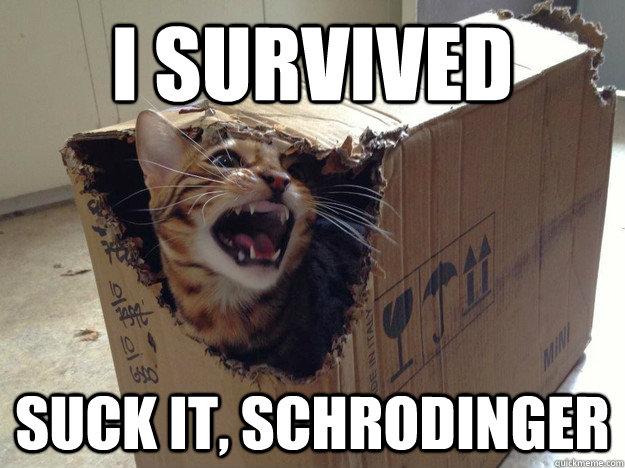 schrödinger s cat resolving