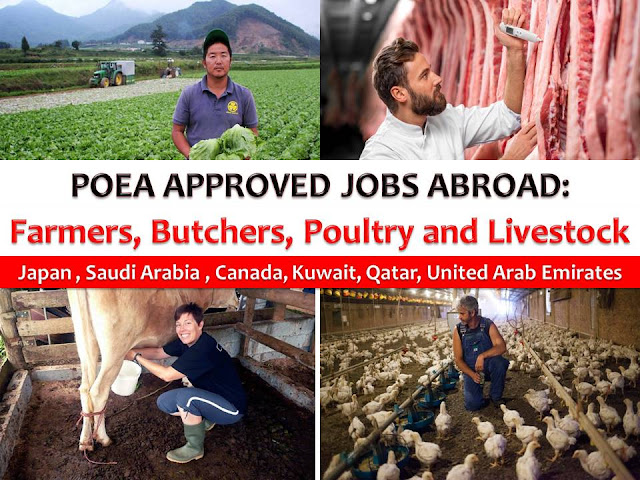 Six countries are looking for Filipino agriculture workers to work as farmers, cultivation farmers, livestock farmers, livestock agriculture, agriculture labor, meat cutter or butcher, industrial butcher, and workers in poultry processing industry.  The following are POEA approved agricultural jobs that are bound to Japan, Saudi Arabia, Canada, United Arab Emirates, Qatar, and Kuwait.
