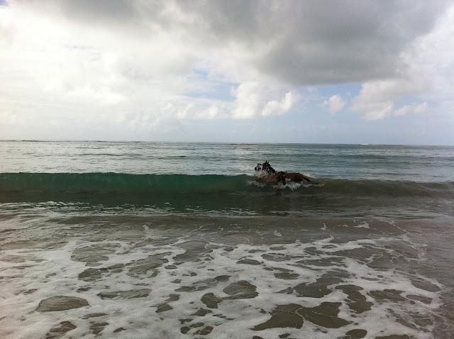 Égua e potro na praia de Porto de Galinhas/ Foto: Marcelo Migliaccio