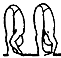 ashtanga vinyasa yoga são paulo standing poses / posturas