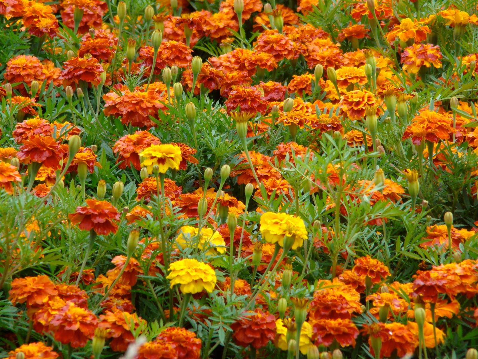 lente soorten bloemen