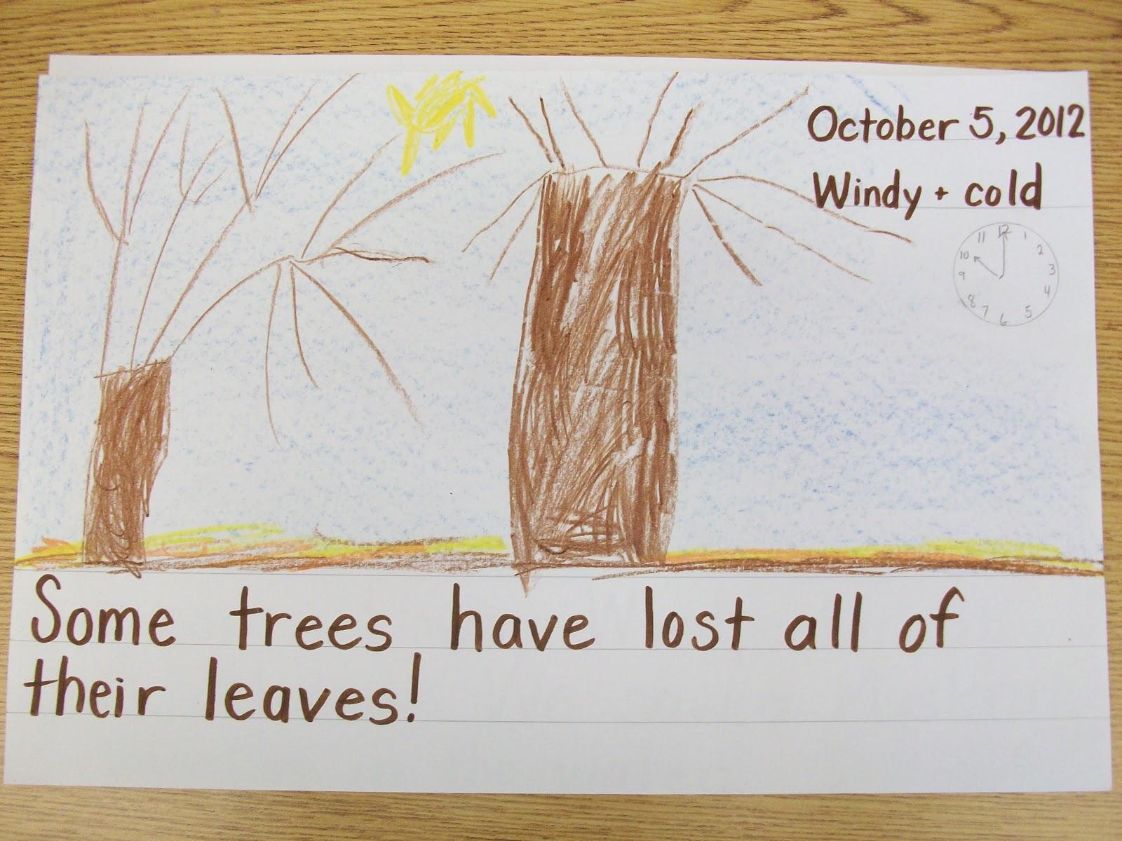 A Year In Kindergarten Nature Observation Journal