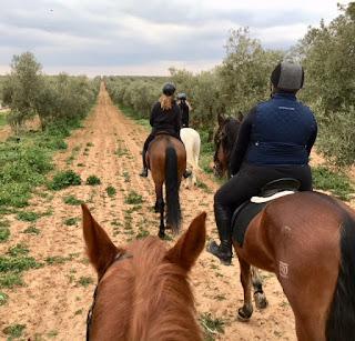 Horsexplore, riitta reissaa, Cortijo Uribe, canter, Andalucia