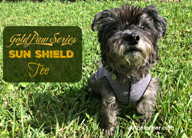 oz wears gold paw series sun shield tee to protect against allergens