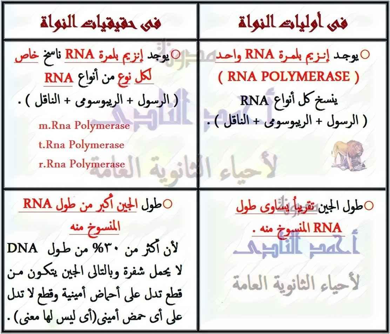 مقارنة بين النسخ فى أوليات النواة و حقيقيات النواة - الكودونات - الأحماض الأمينية - m.rna - تخليق البروتين - الثالث الثانوى