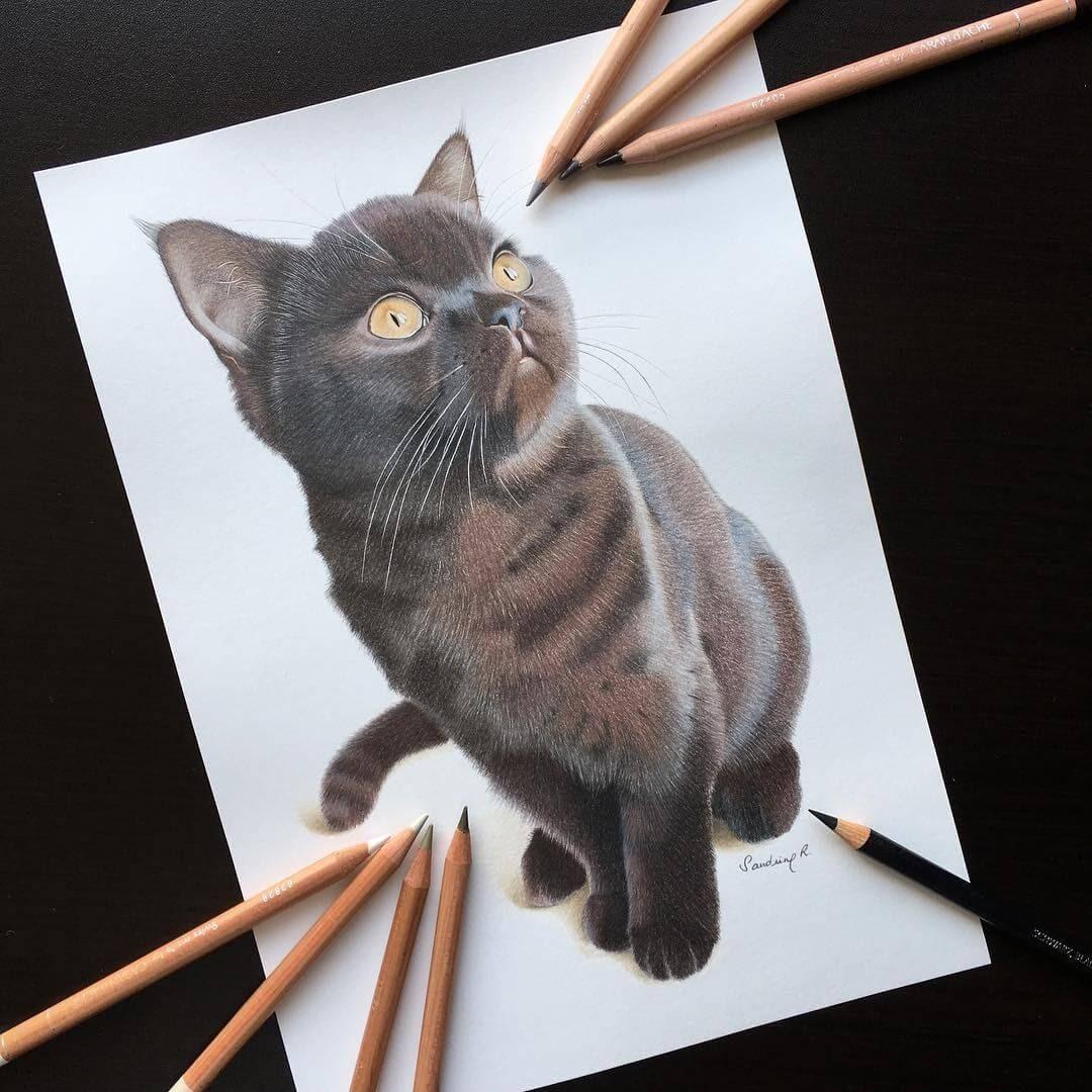 10-British-short-hair-Millie-Sandrine-R-Sweet-Realistic-Animal-Portrait-Drawings-www-designstack-co