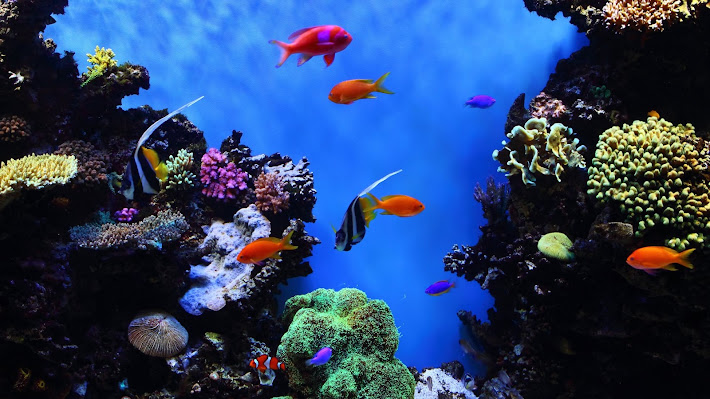 Wallpaper: Tropical Fish at Monterey Bay Aquarium